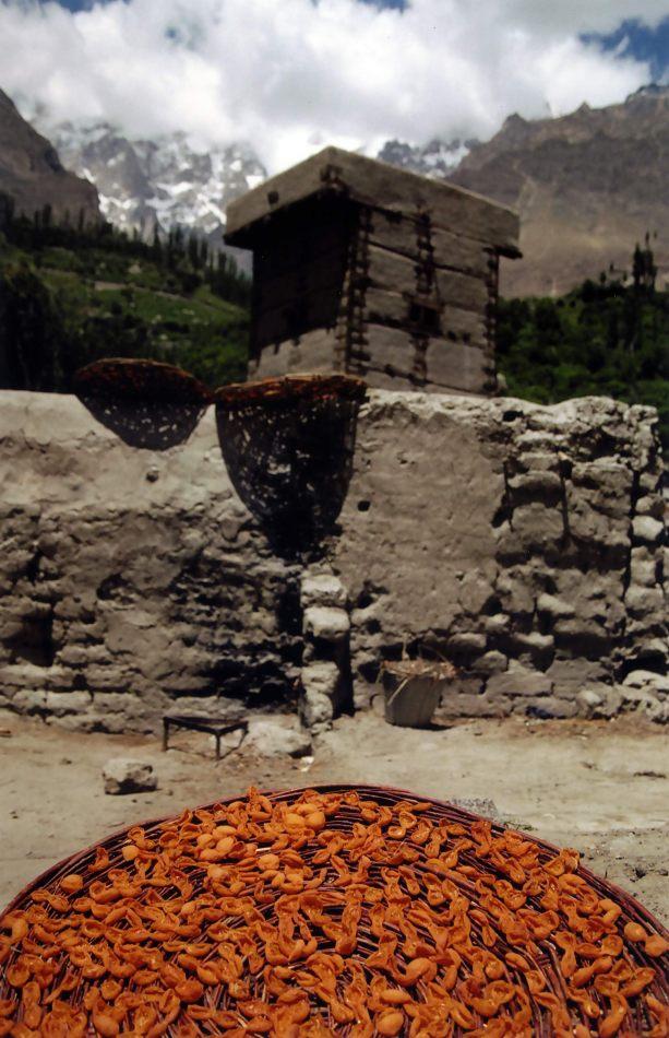 Anthony Ellis Photography: Zindabad - Drying Apricots