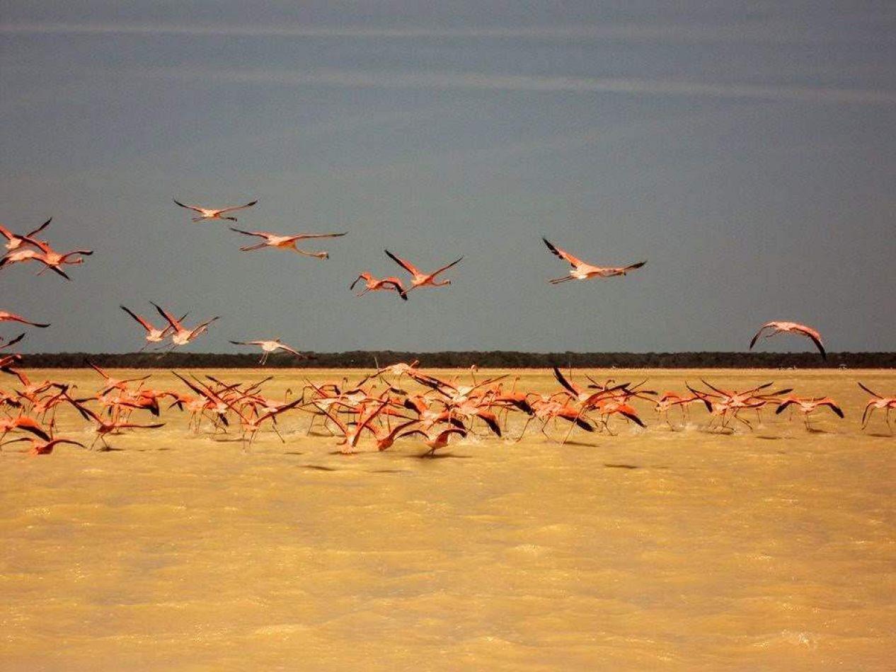 Hibiscus & Nomada : - - Flamingo