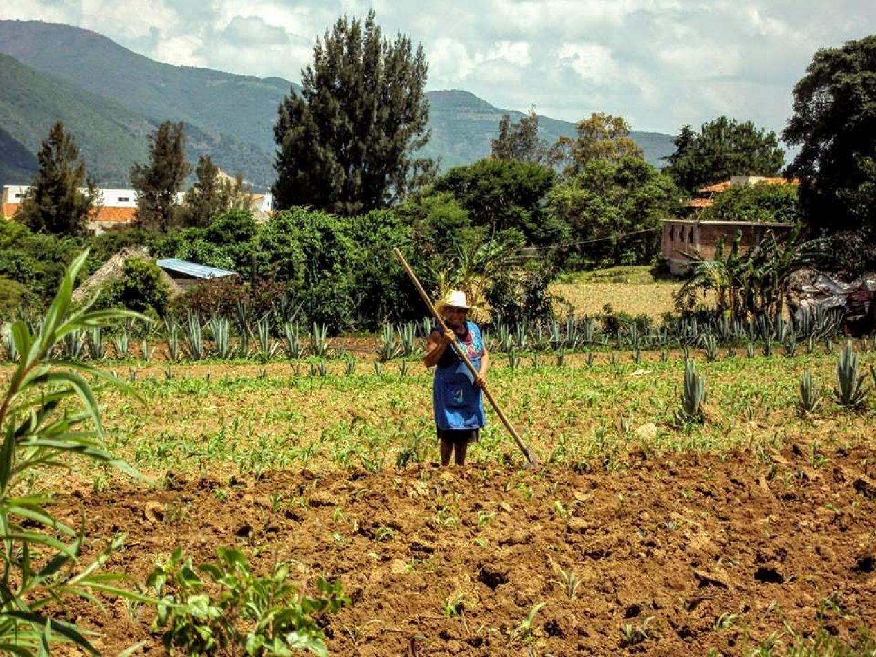 Hibiscus & Nomada : - - Chiapas