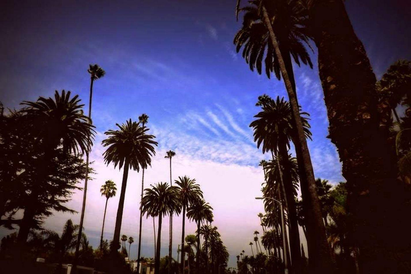 Hibiscus & Nomada : - - Beverly Hills