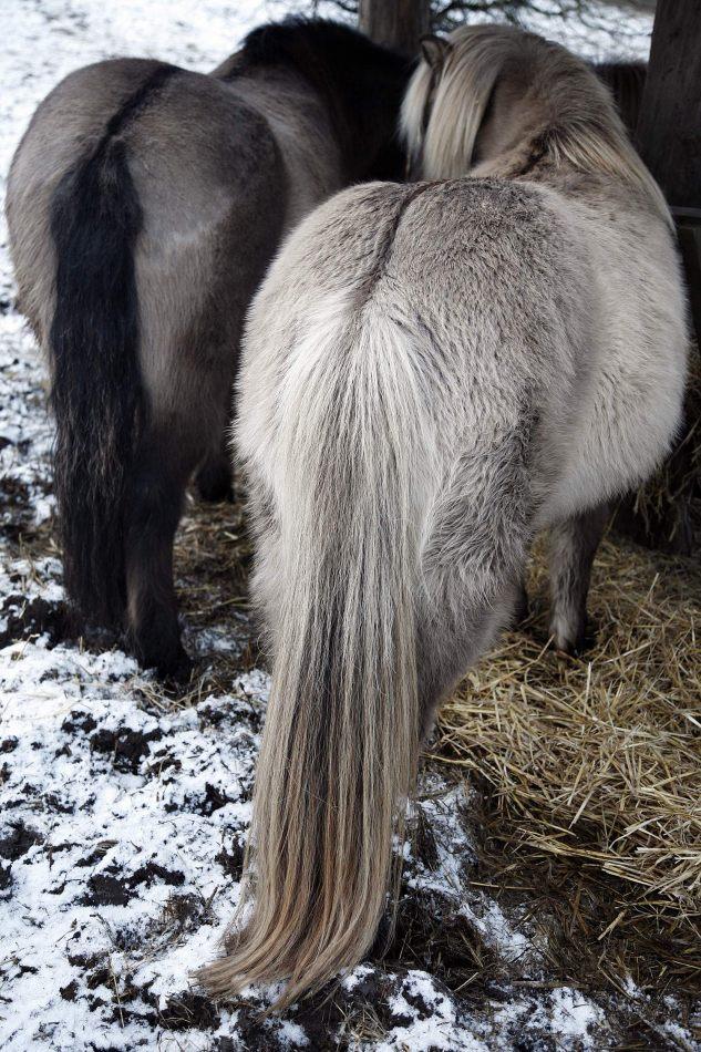 Anthony Ellis Photography: Silent Afternoons - Shetland Ponies
