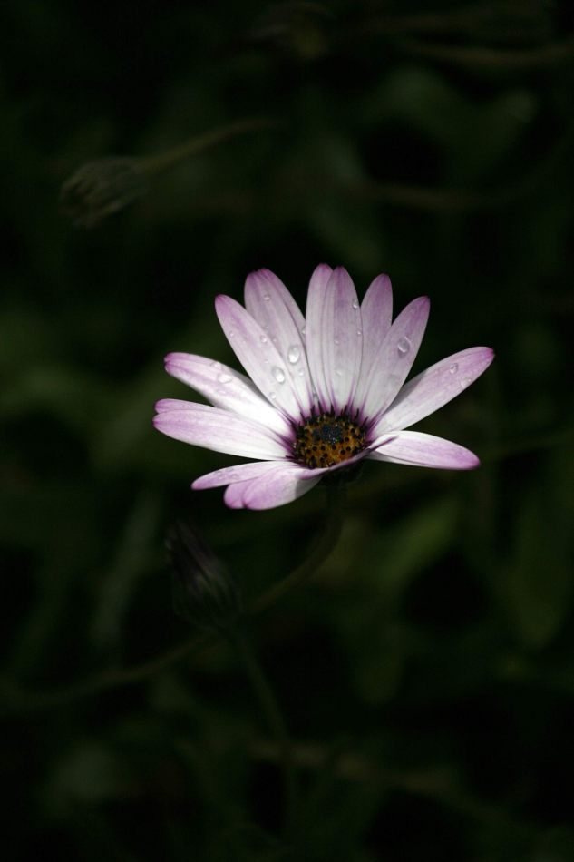 Anthony Ellis Photography: Eidirsgan - Wildflower