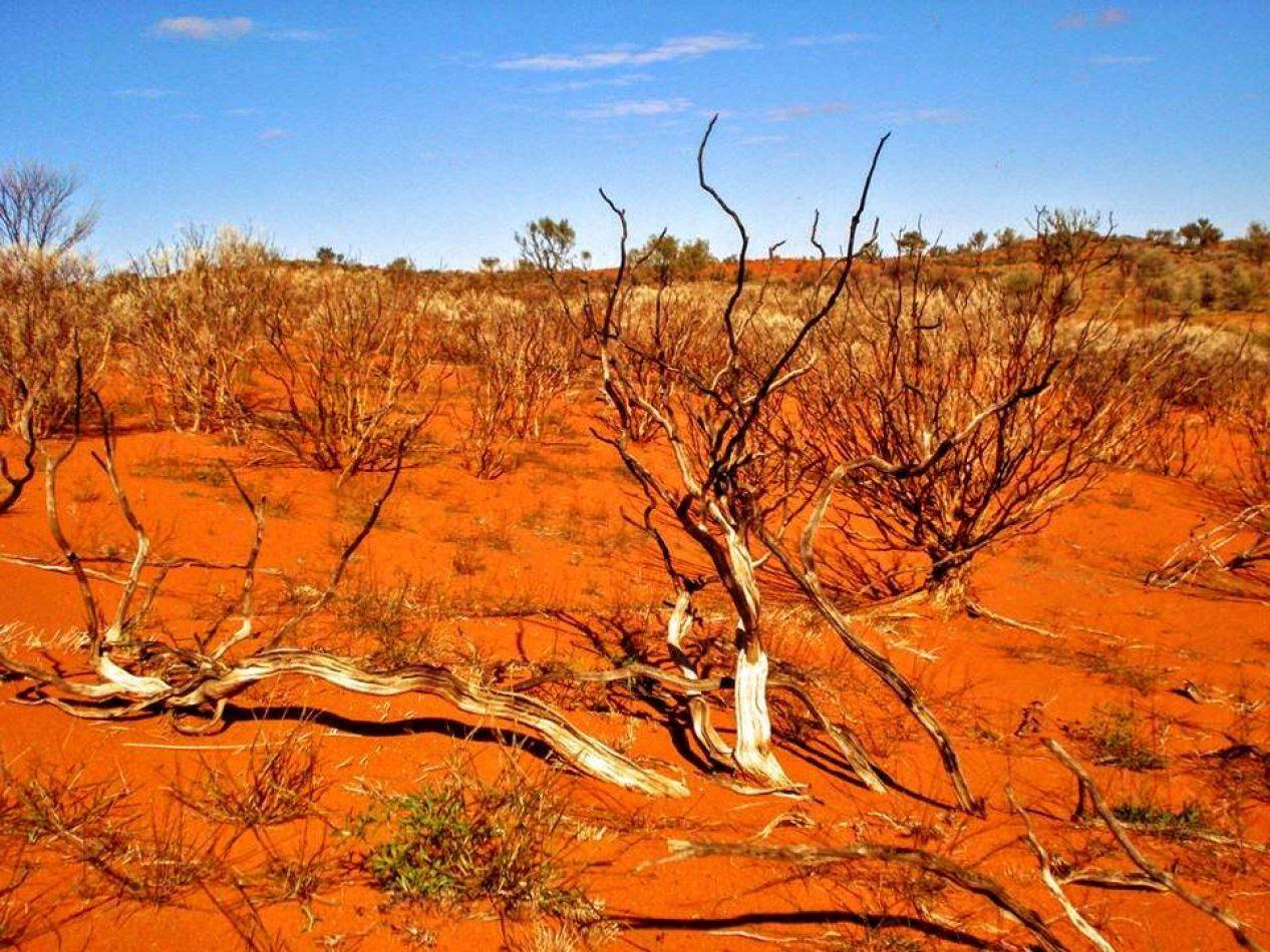 Hibiscus & Nomada : Australia - Alice Springs