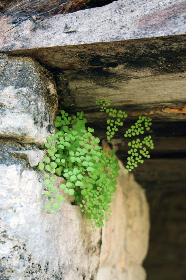 Anthony Ellis Photography: Small Sacrifices - Green from Stone