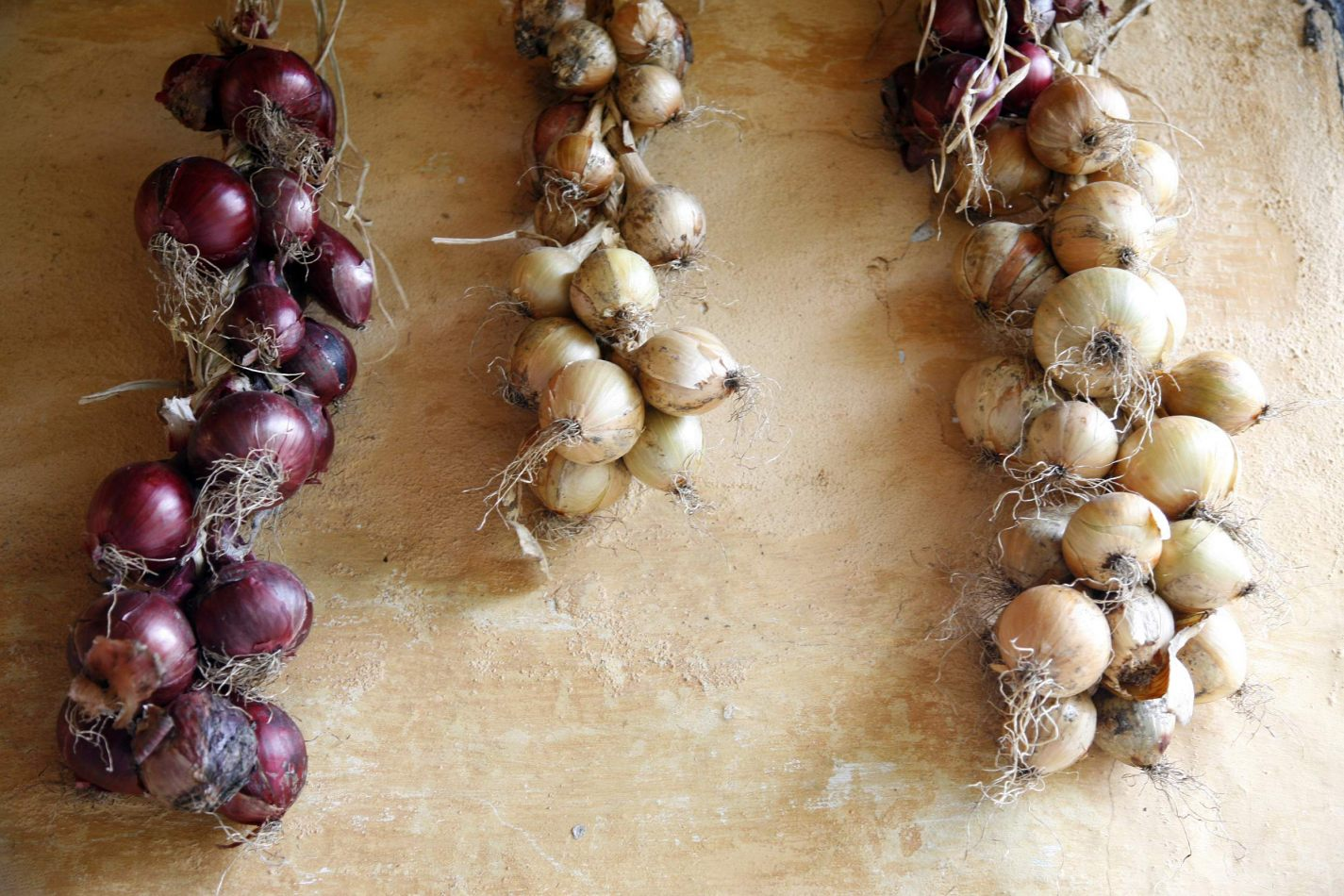 Anthony Ellis Photography: Silent Afternoons - Onions
