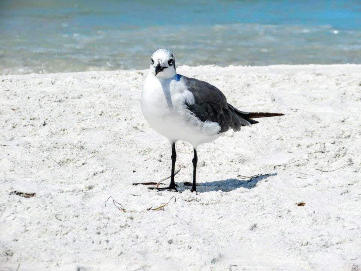 Hibiscus & Nomada : - - Seagull