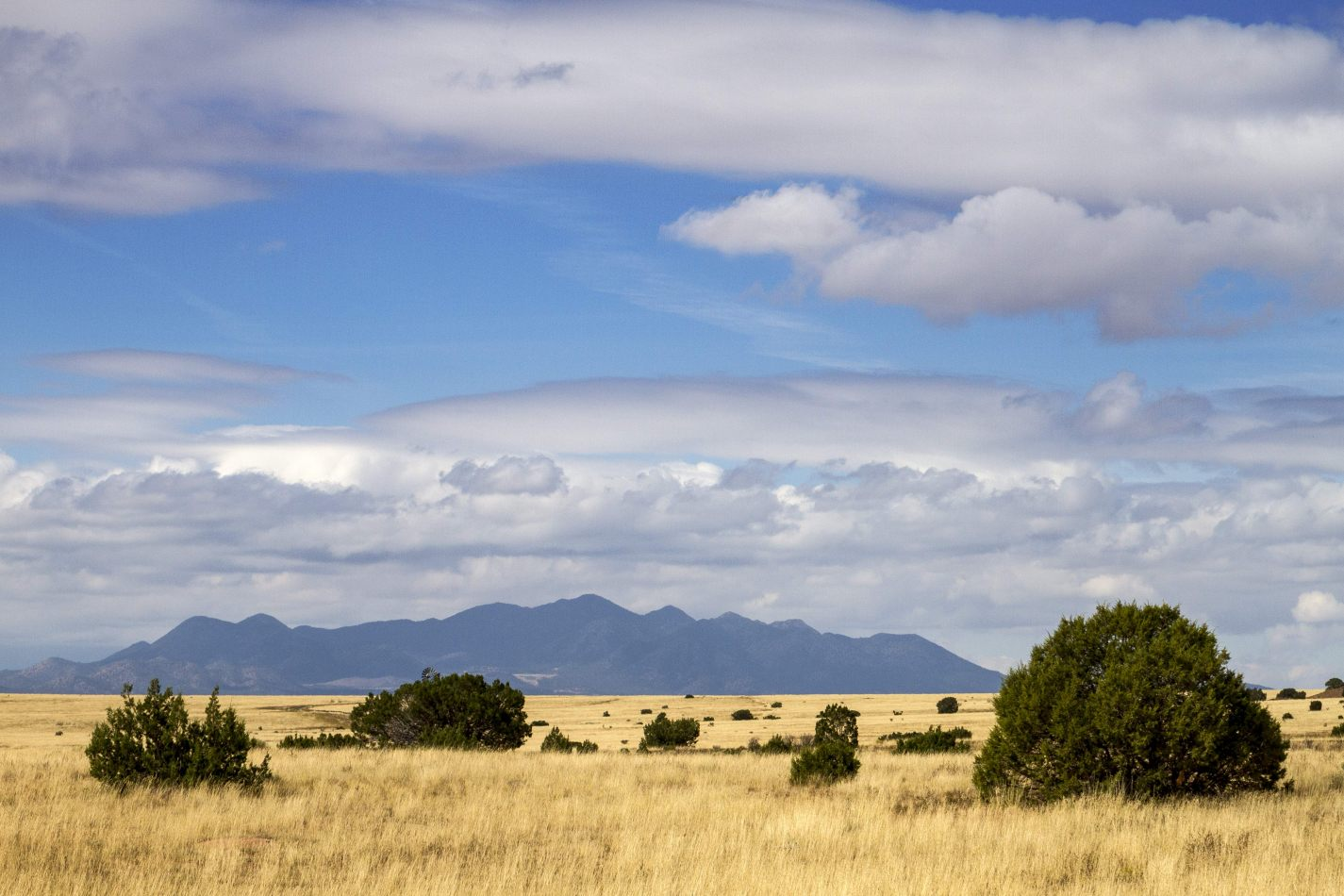 Storvandre: New Mexico