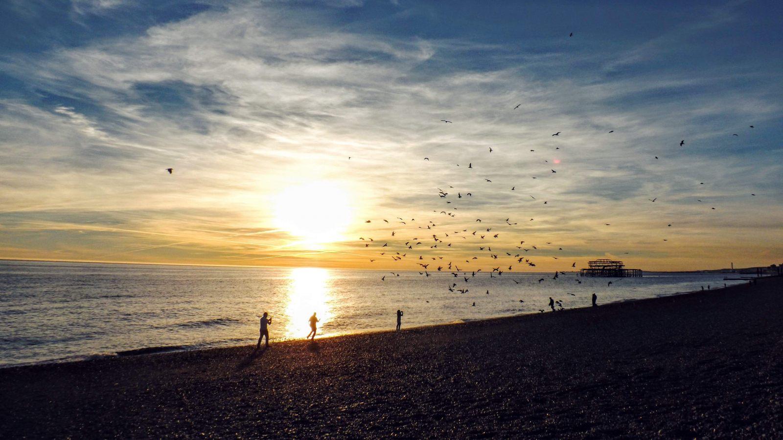 Hibiscus & Nomada : Brighton - Seagulls