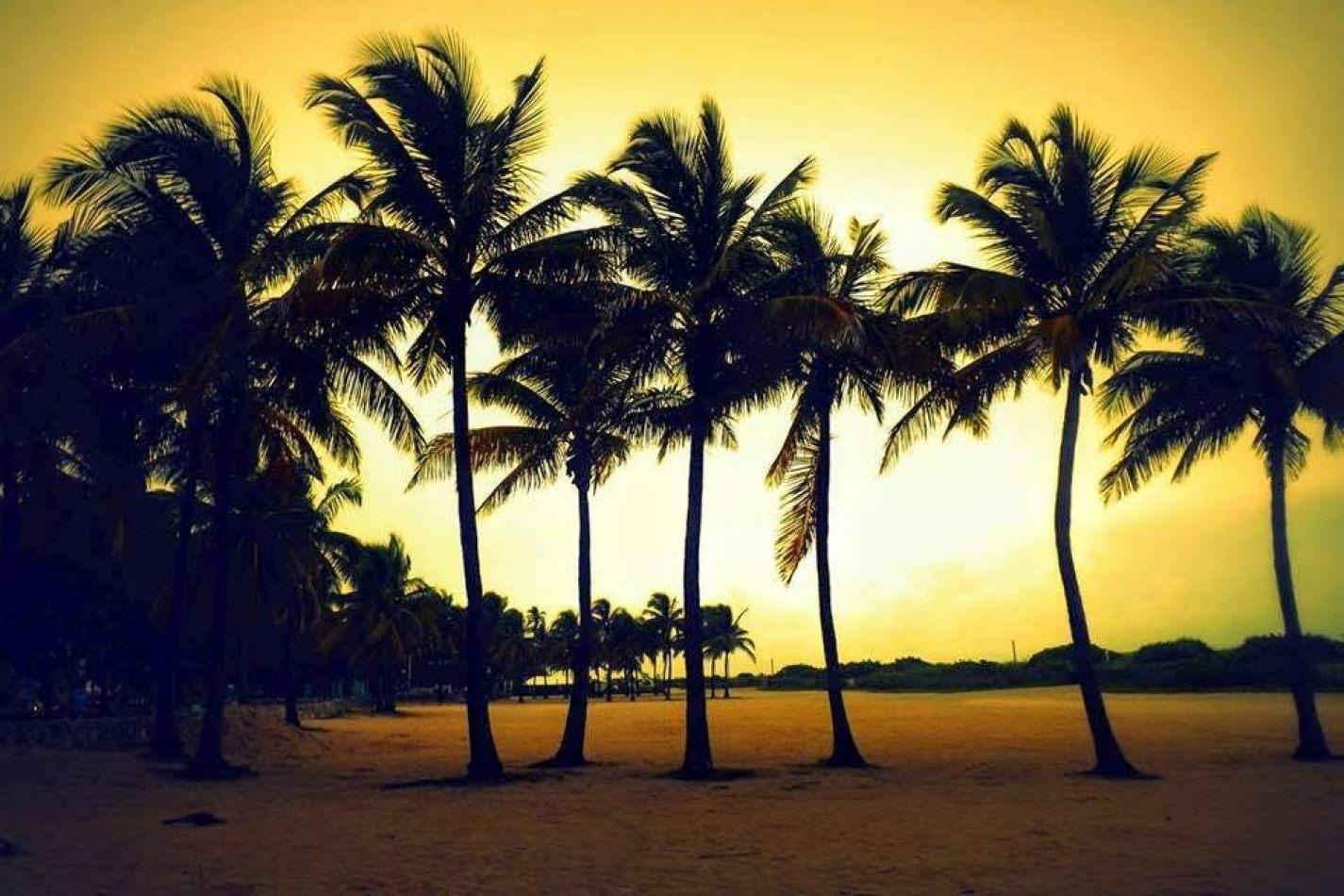 Hibiscus & Nomada : Florida - Miami by Night