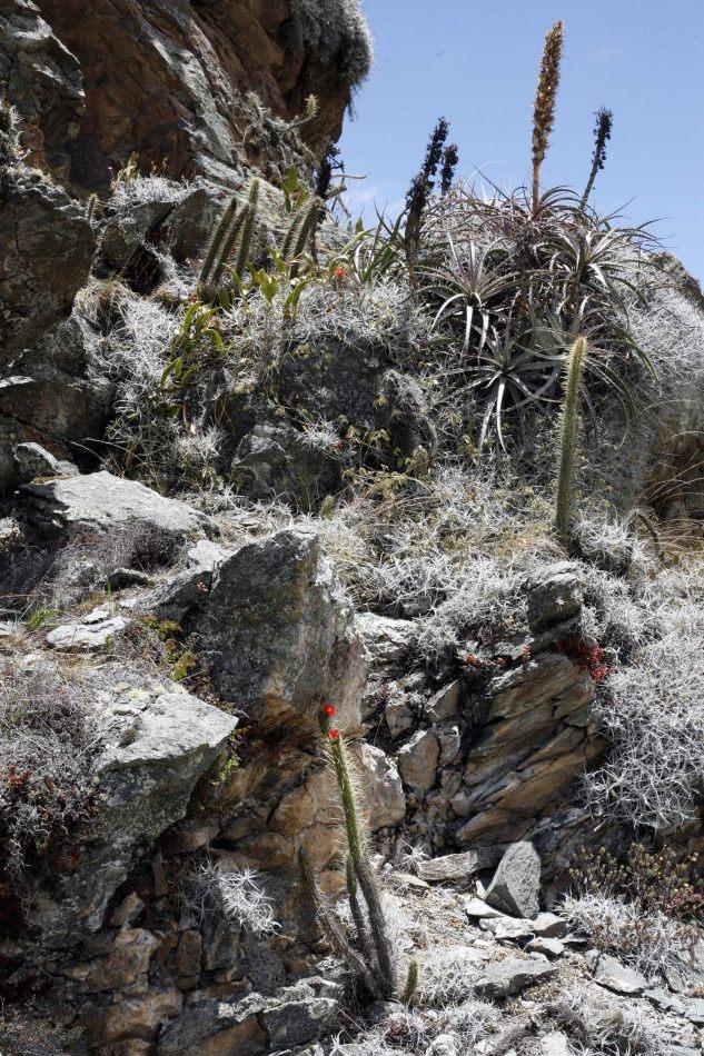 Anthony Ellis Photography: Apus - Cacti