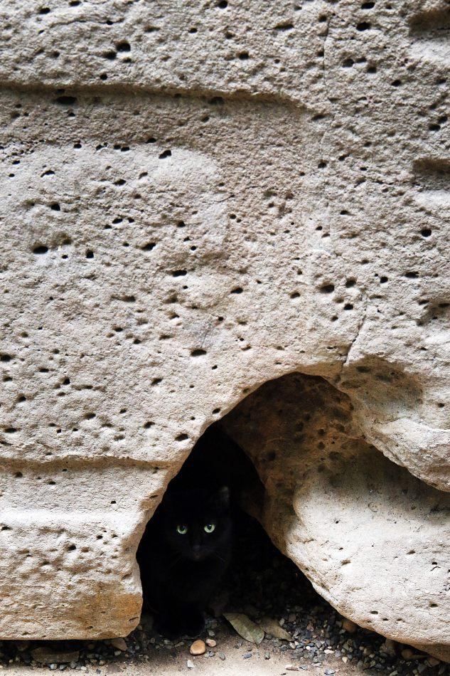 Anthony Ellis Photography: Small Sacrifices - Cat's Eyes