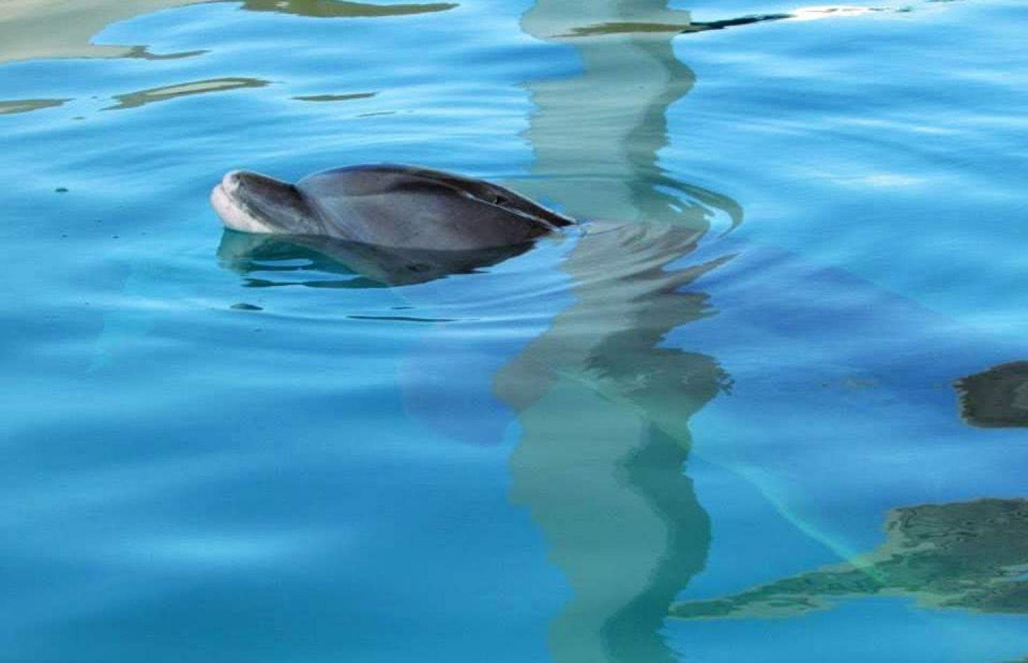 Hibiscus & Nomada : Florida - Winter The Dolphin