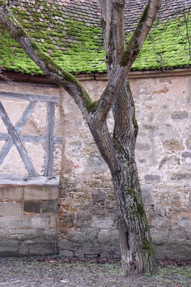 Anthony Ellis Photography: Das Ist - Moss Tree