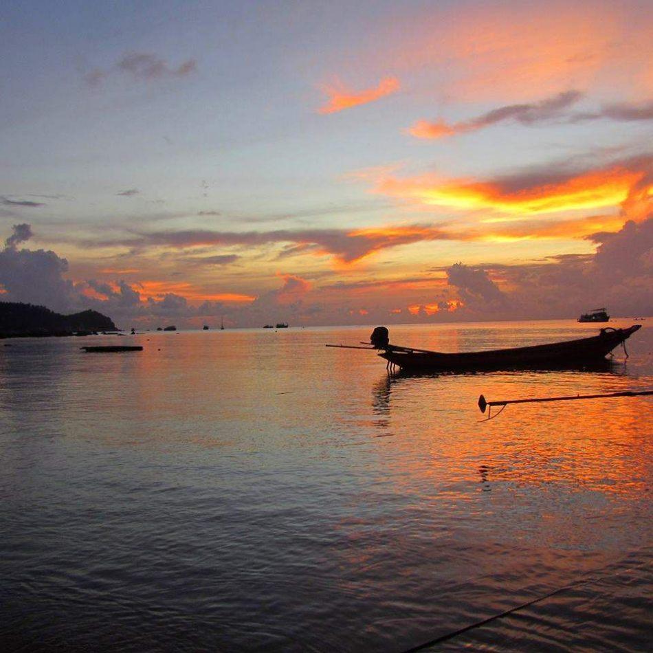 Hibiscus & Nomada : - - Sairee Beach, Koh Tao