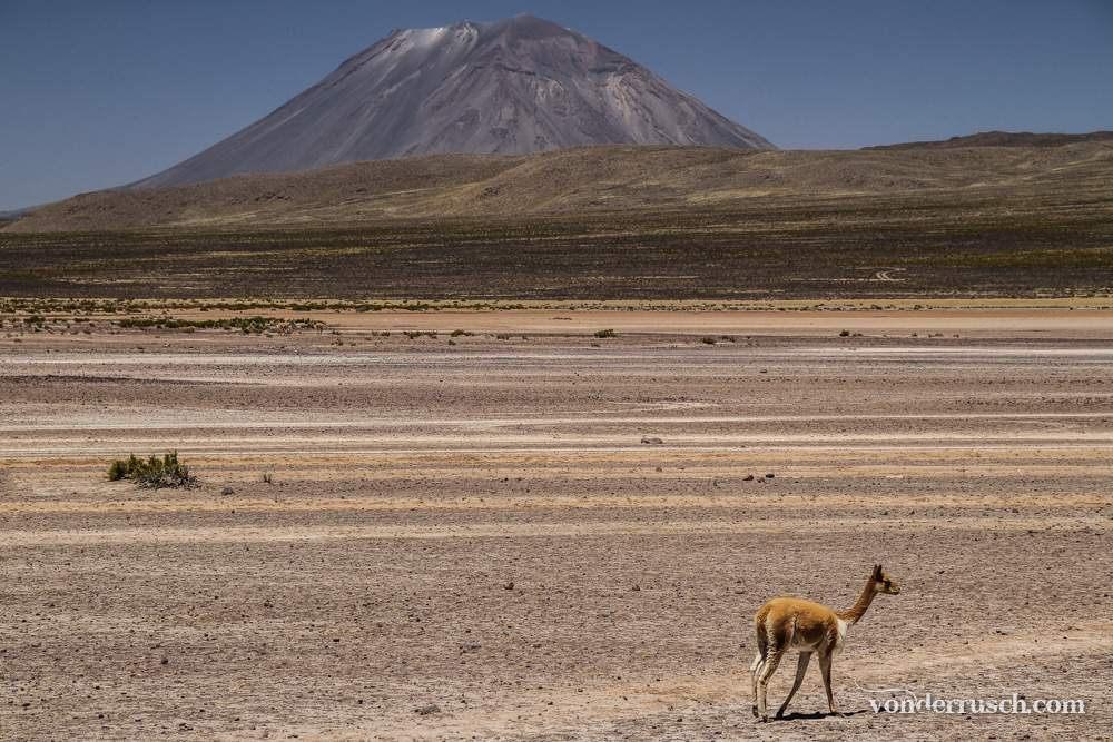 Lone Vicu� a Peru