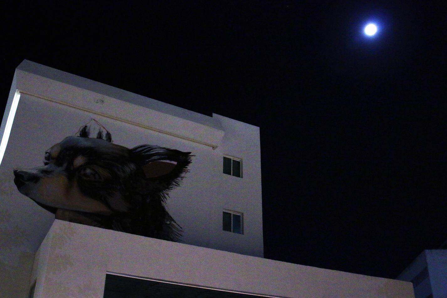 Anthony Ellis Photography: Small Sacrifices - Moon Dog