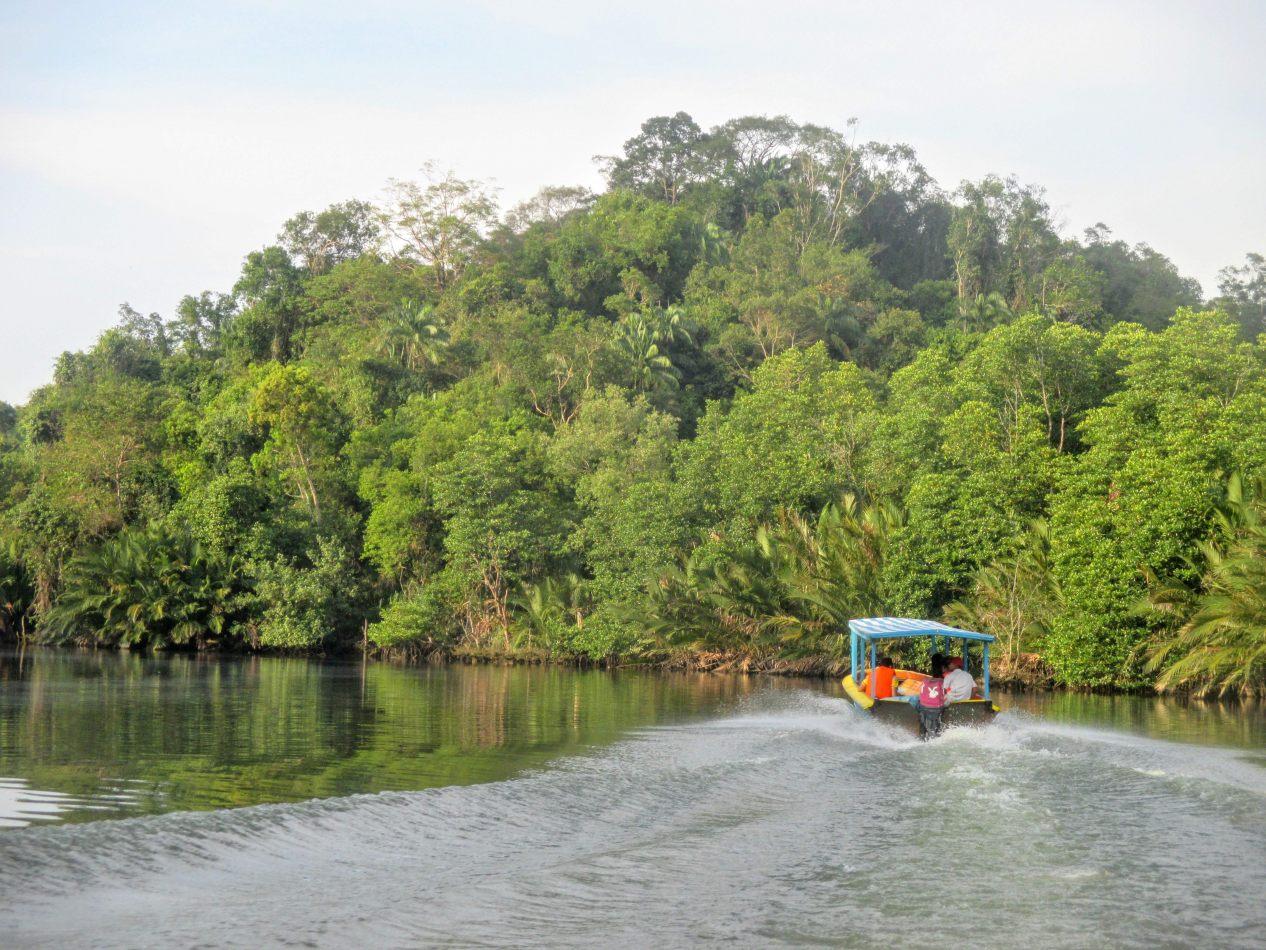 Hibiscus & Nomada : Brunei -