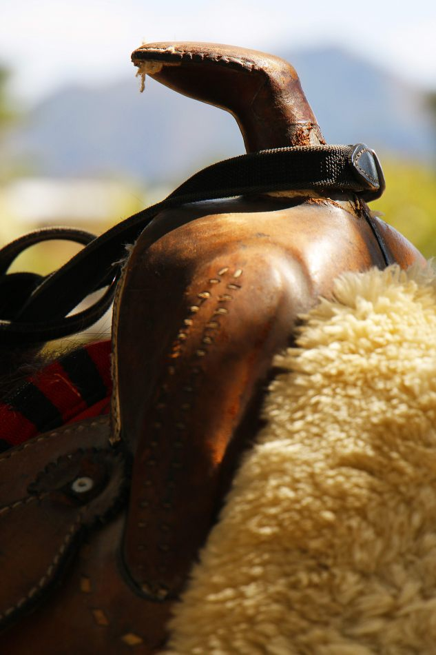 Anthony Ellis Photography: Small Sacrifices - Western Saddle