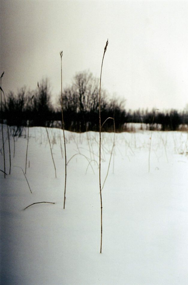 Anthony Ellis Photography: Crosses in the Snow - Black Reed