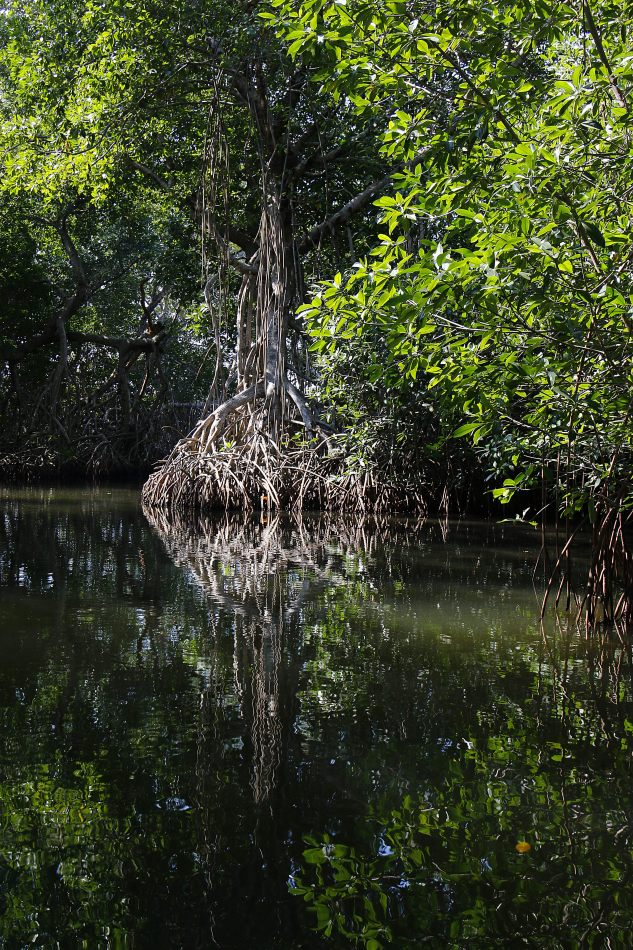 Anthony Ellis Photography: Small Sacrifices - Mangrove