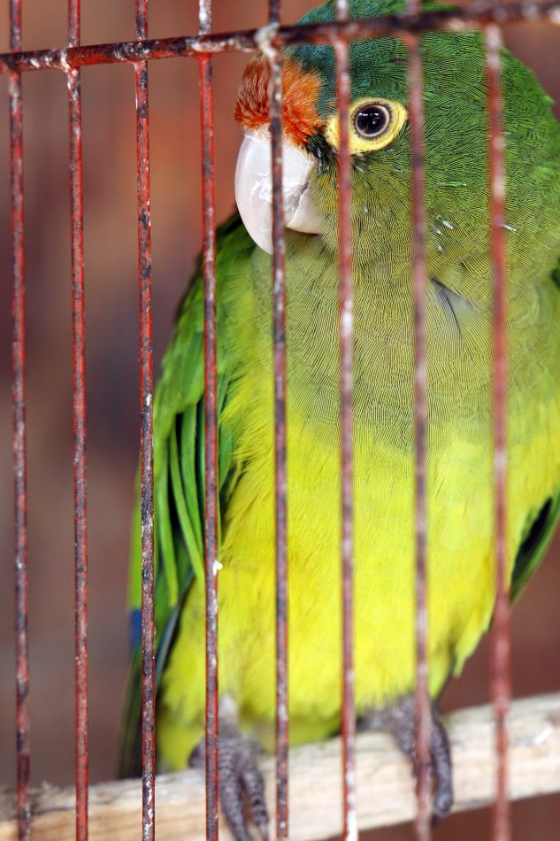 Anthony Ellis Photography: Small Sacrifices - Caged Amazon