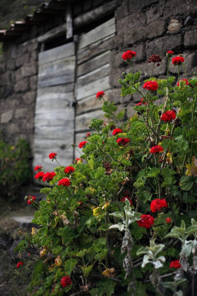 Anthony Ellis Photography: Apus - Grey Doors and Red Flowers