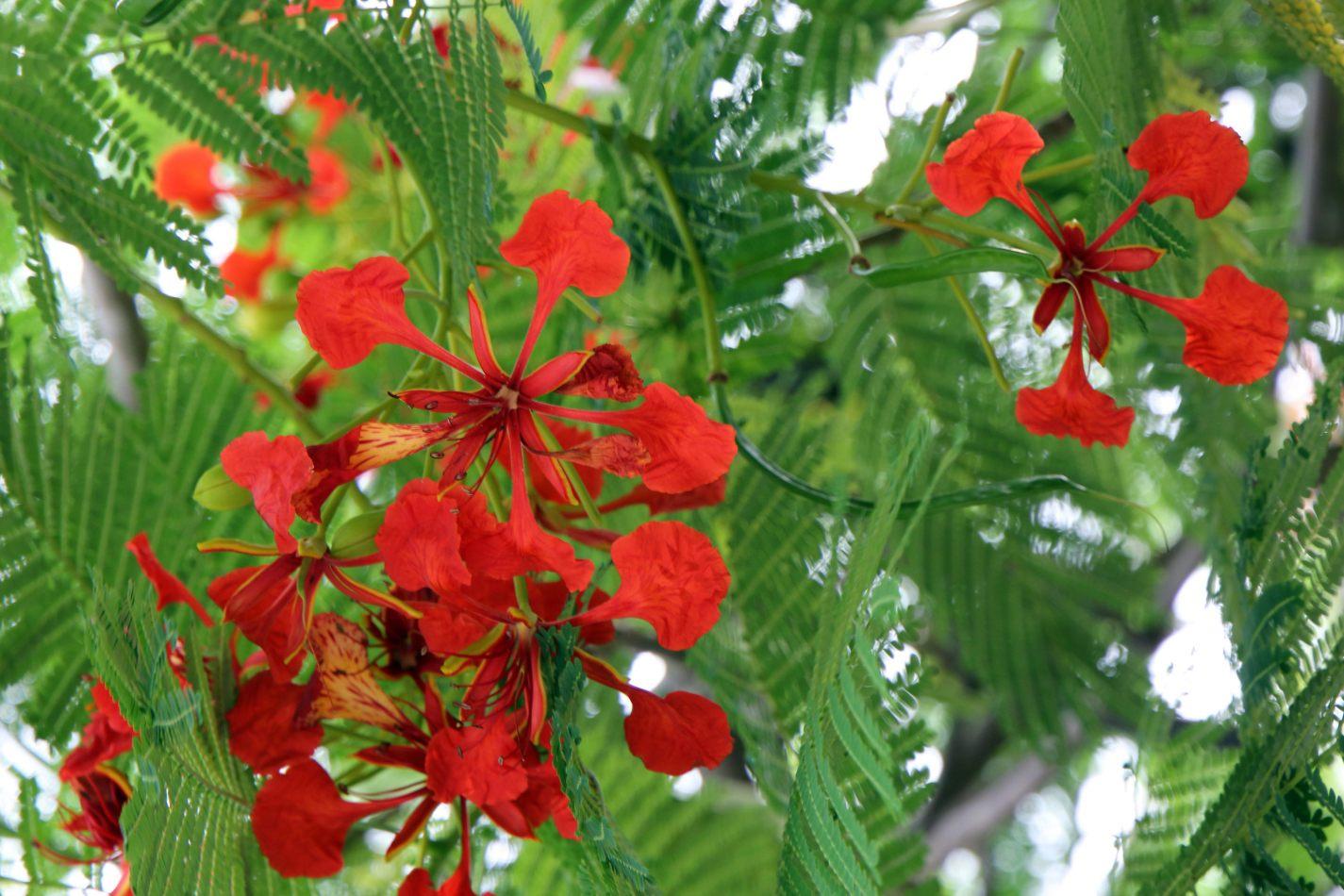 Anthony Ellis Photography: Antes del Refer� ndum - Red-orange Petals