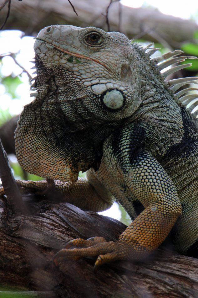 Anthony Ellis Photography: Antes del Refer� ndum - Godzilla