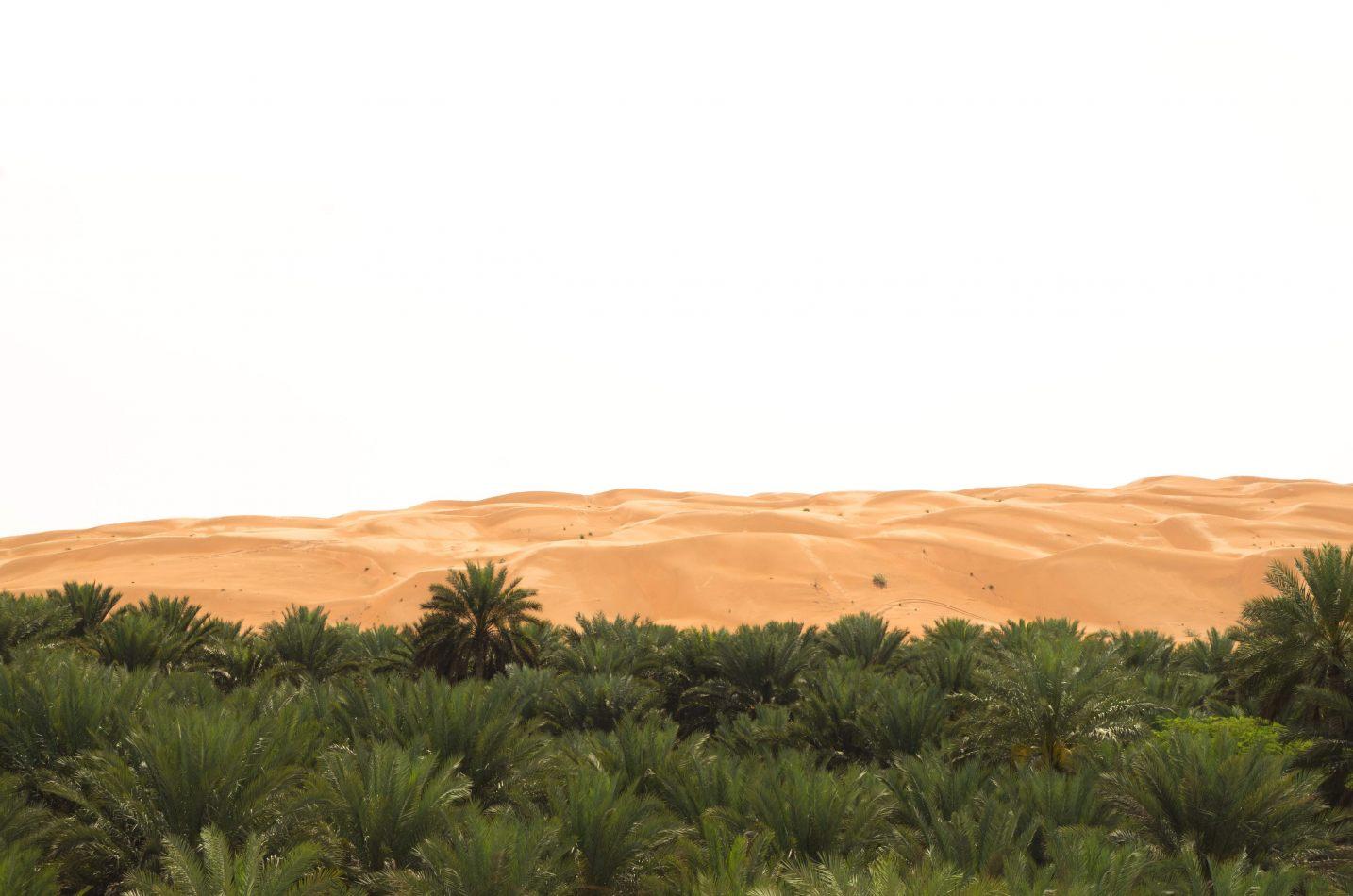 Hibiscus & Nomada : Oman - Oasis