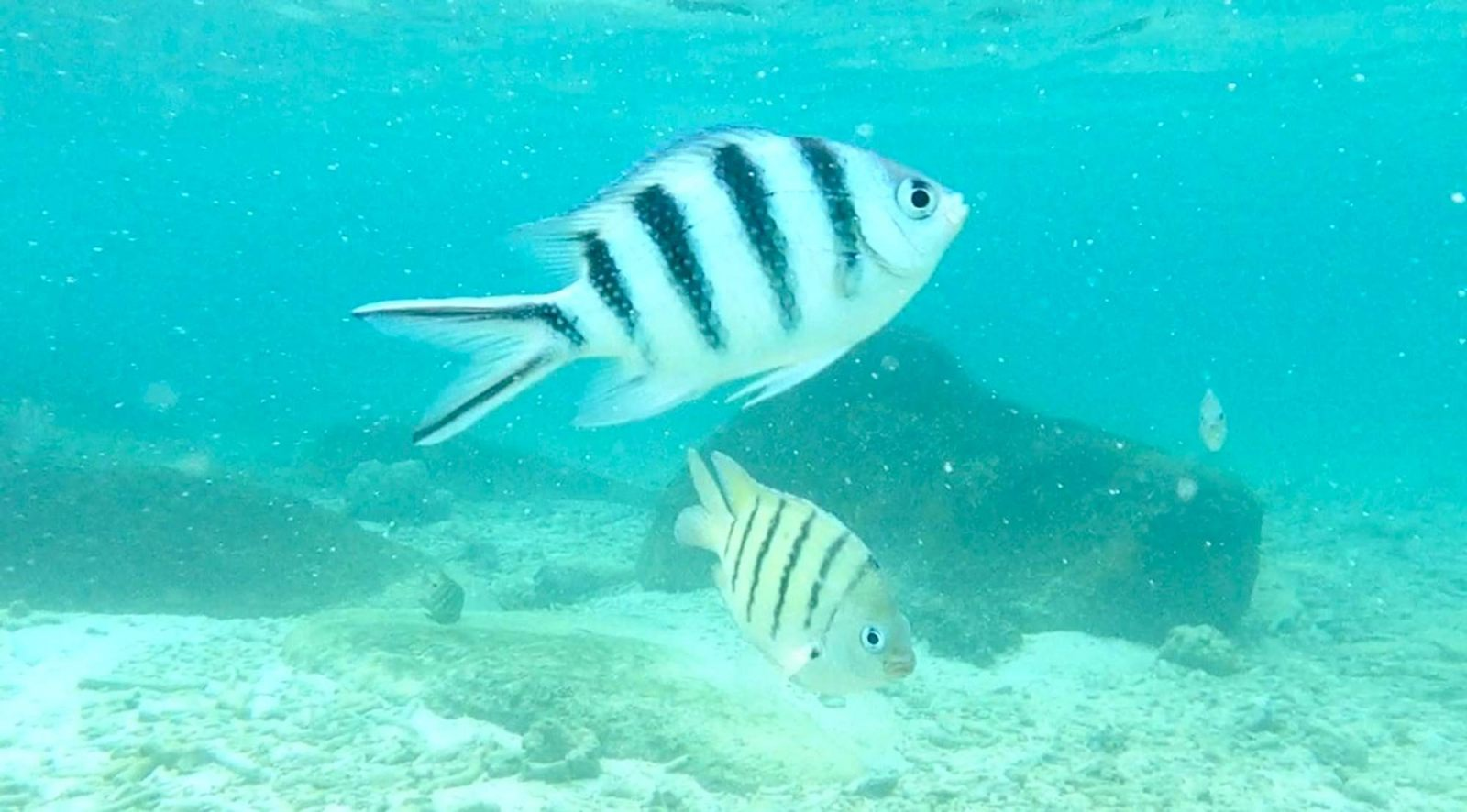 Hibiscus & Nomada : Thailand - Snorkeling in Koh Tao