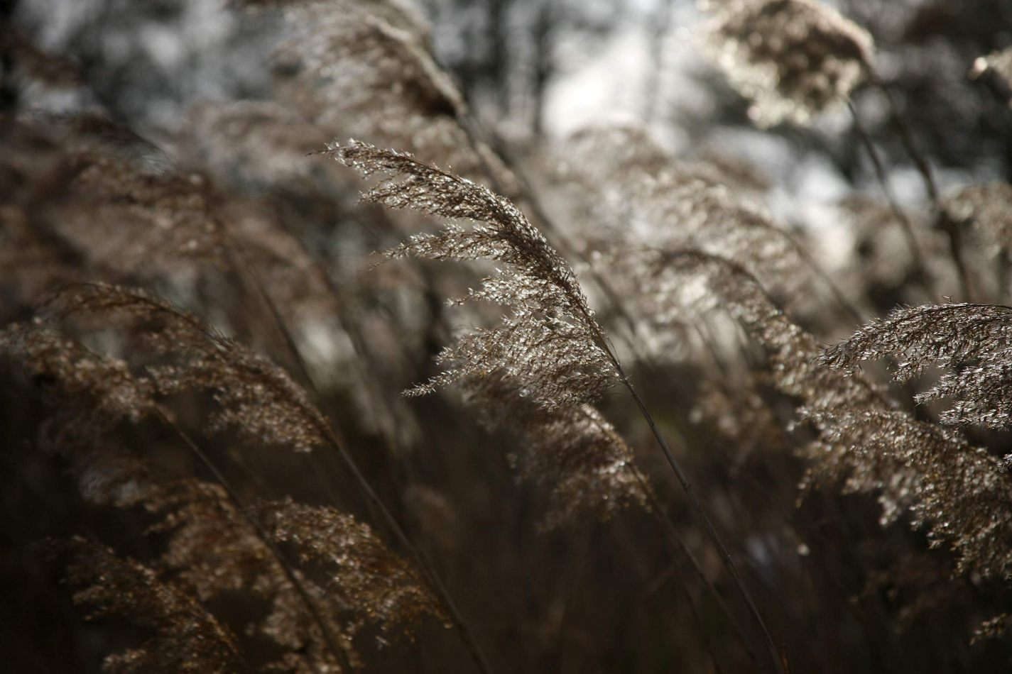 Anthony Ellis Photography: Silent Afternoons - Light Through Reeds