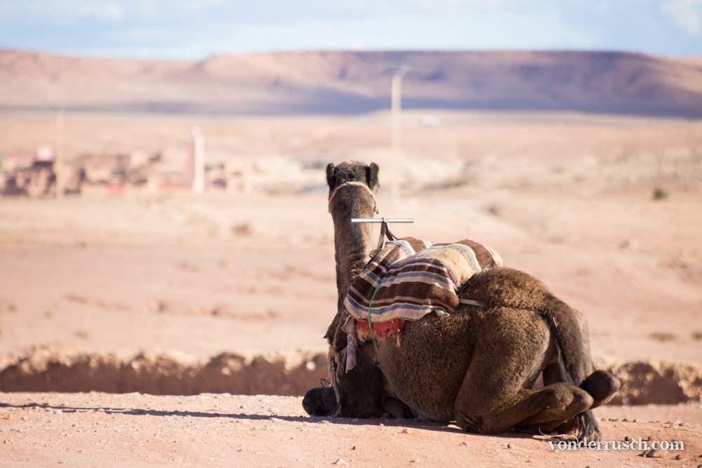Camel Parking     A� t Benhaddou Morocco