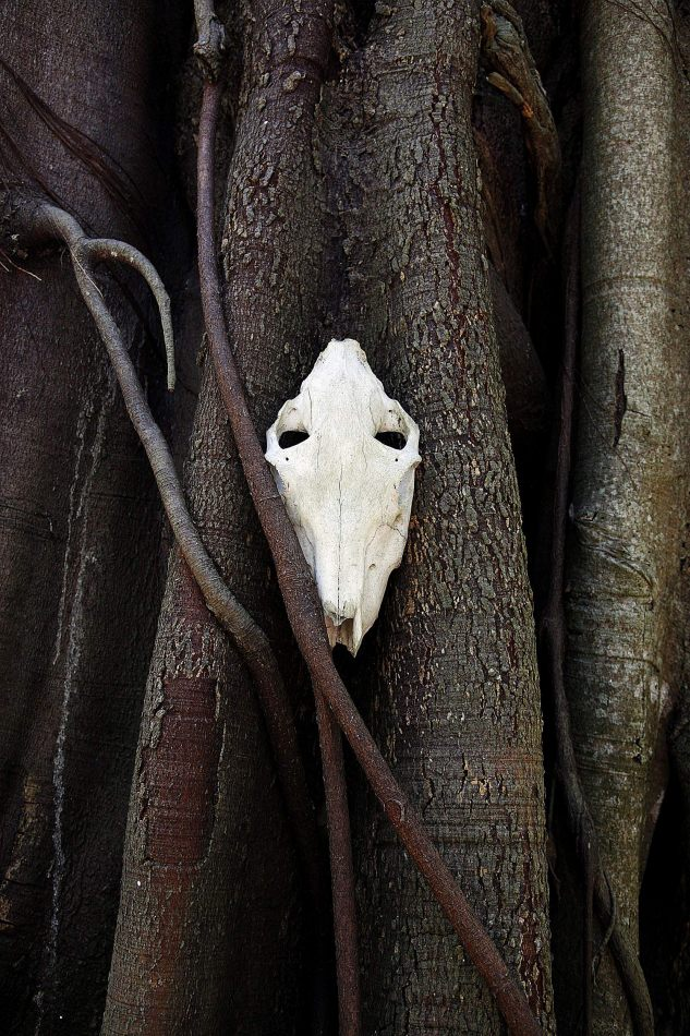 Anthony Ellis Photography: Houses without Smoke - The Skull in the Tree