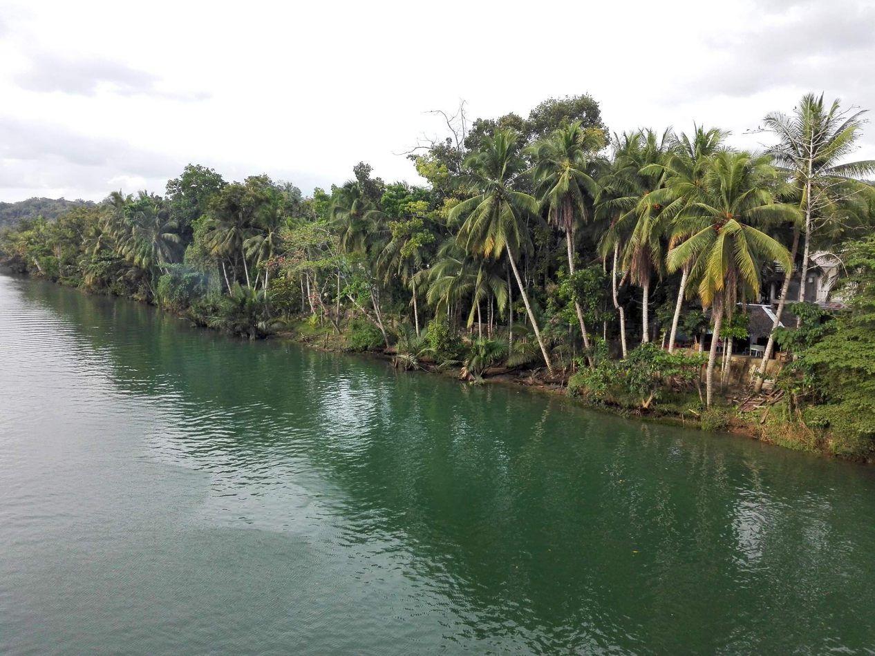 Hibiscus & Nomada : - - Loboc River, Bohol
