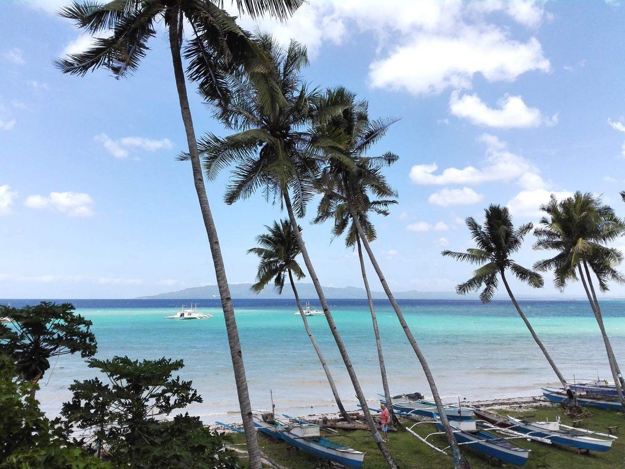 Hibiscus & Nomada : - - Panglao Beach, Bohol
