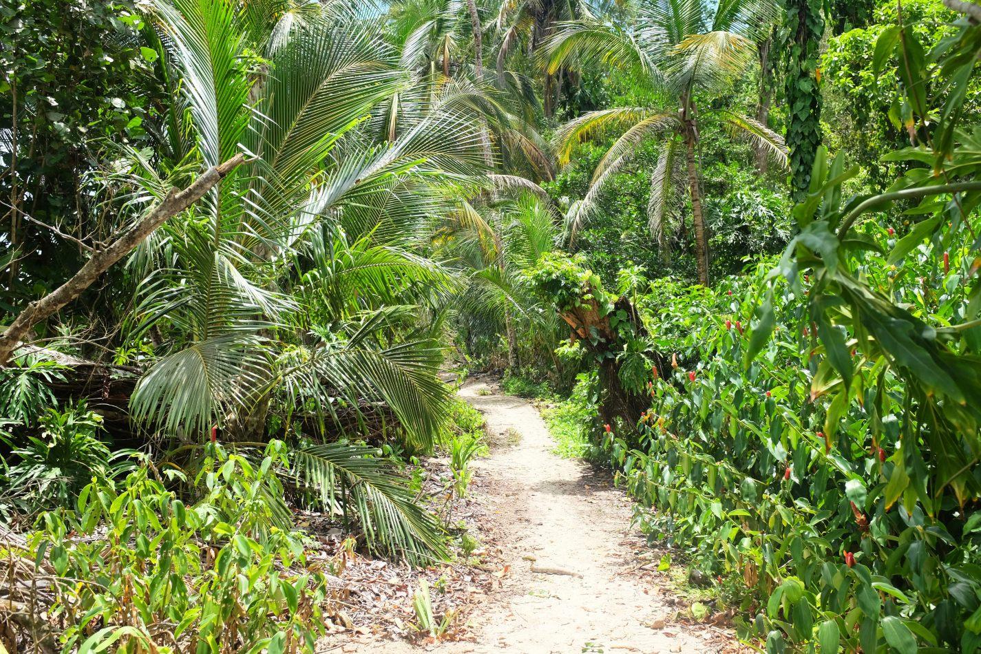 Hibiscus & Nomada : - - Cahuita National Park
