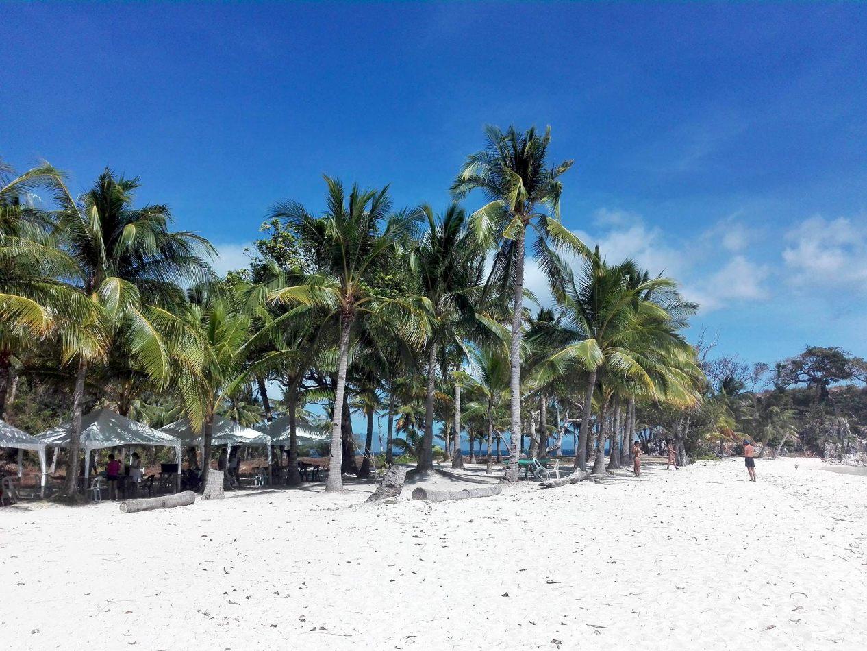 Hibiscus & Nomada : - - Malcapuya Island, Coron
