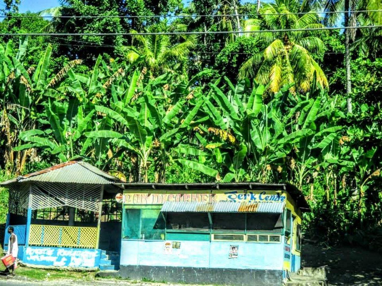 Hibiscus & Nomada : - - Port Antonio