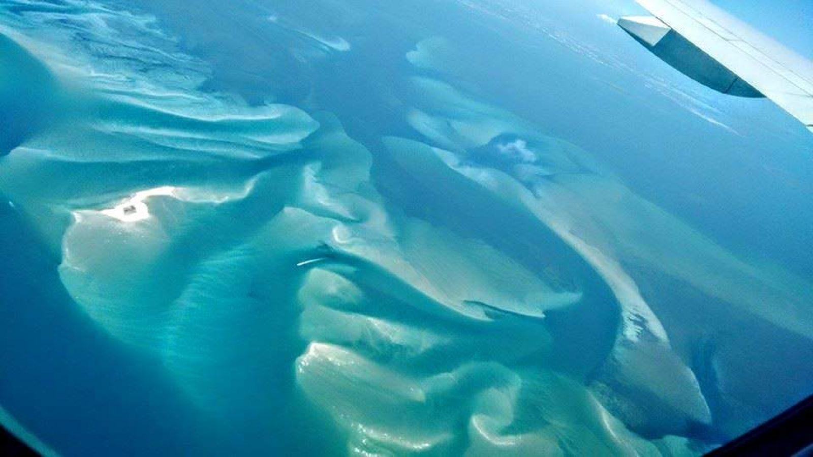Hibiscus & Nomada : - - Airplane View