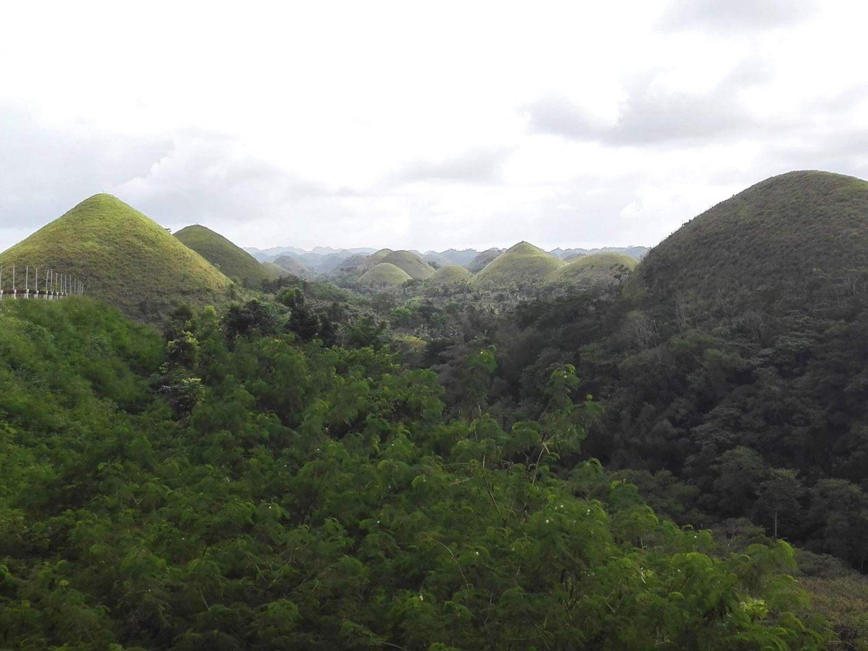 Hibiscus & Nomada : - - Chocolate Hills, Bohol