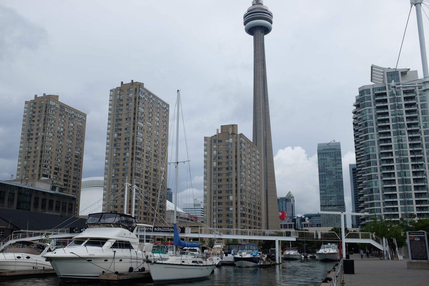 Hibiscus & Nomada : - - CN Tower