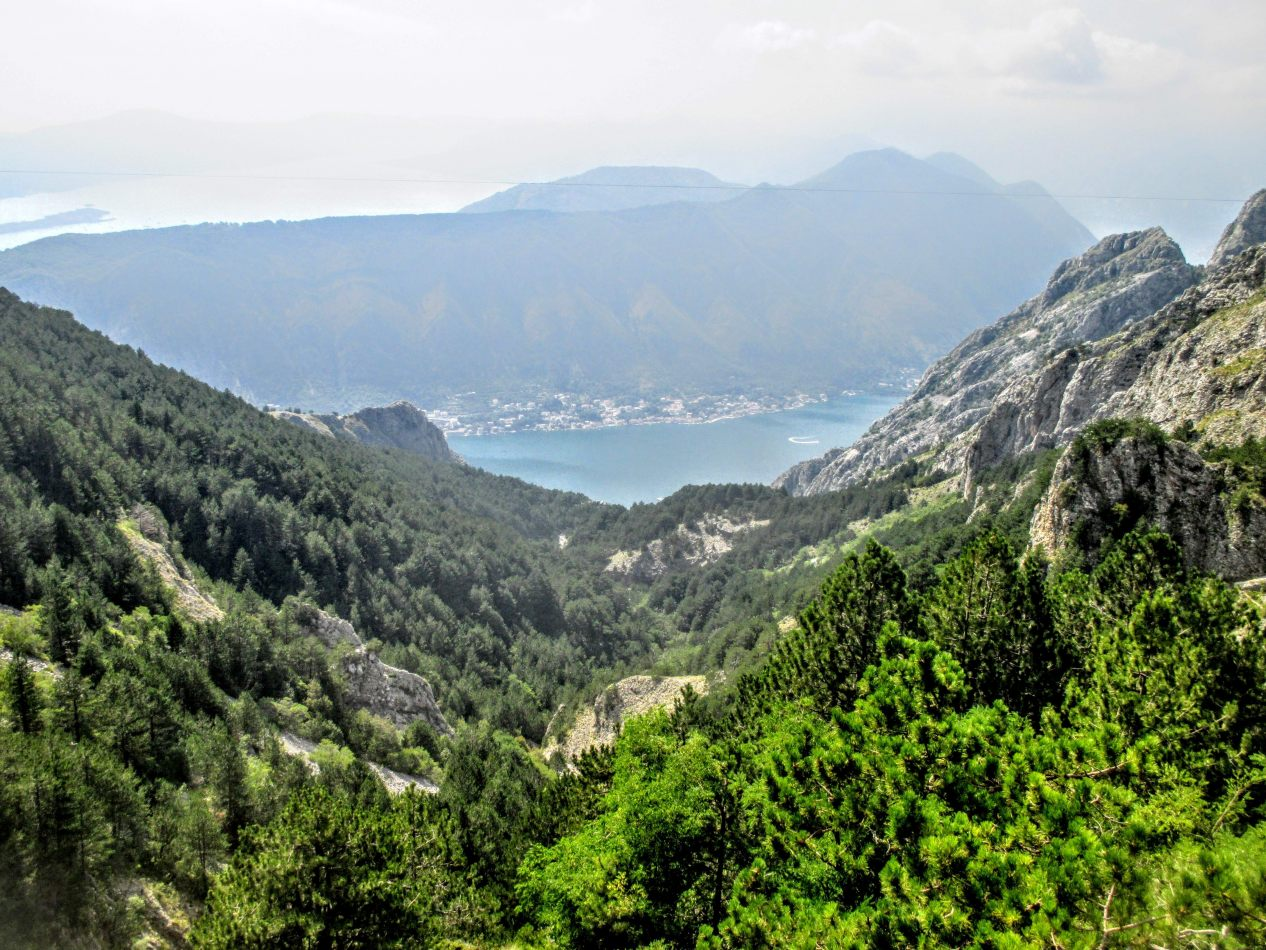 Hibiscus & Nomada : - - Montenegro