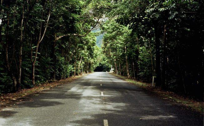 Australia Exploring the world   s oldest tropical rainforest