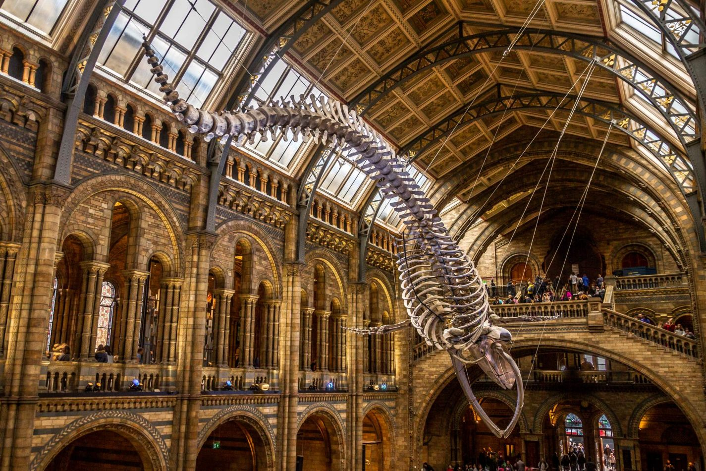 Storvandre: Natural History Museum