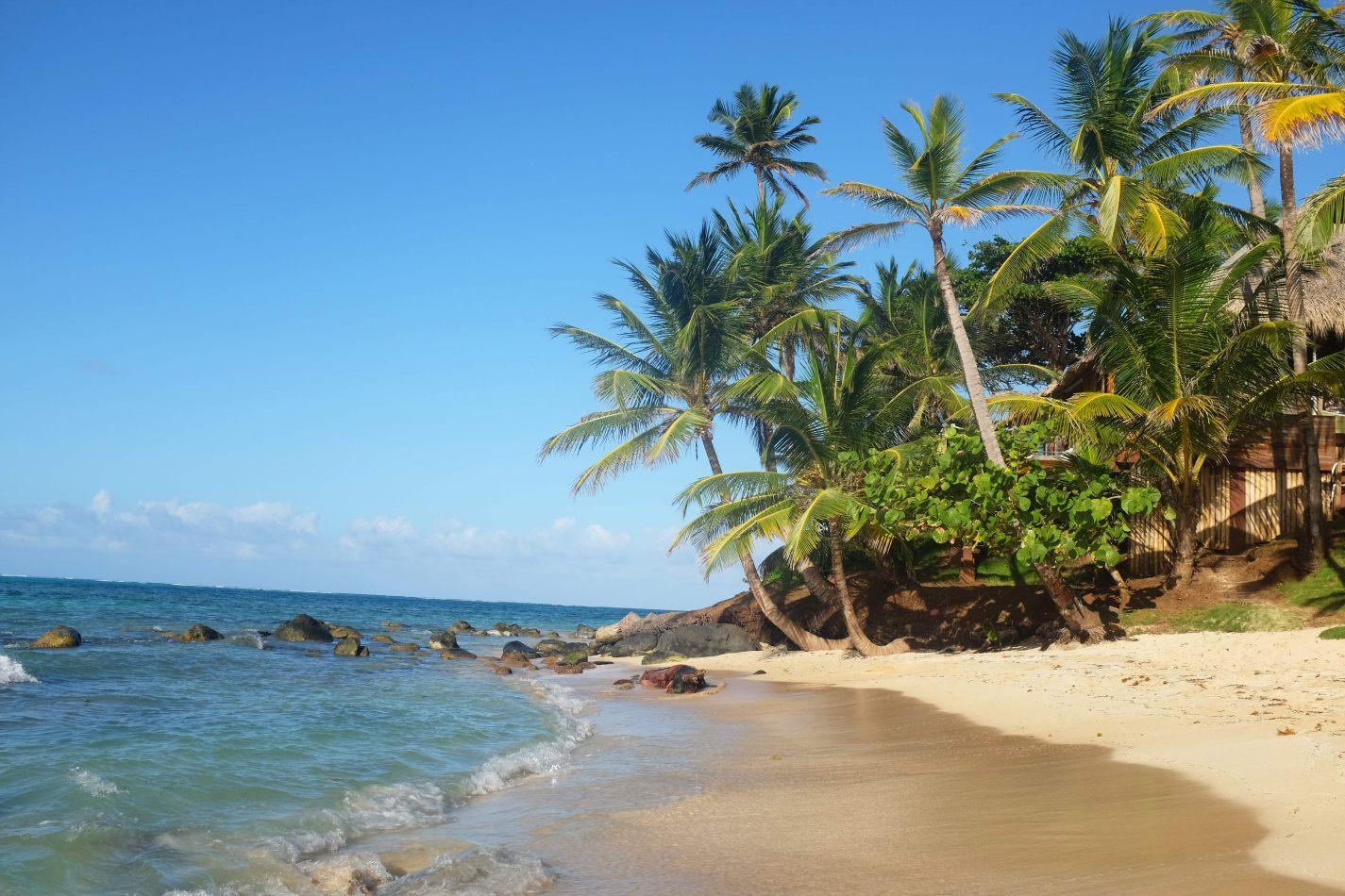 Hibiscus & Nomada : - - Little Corn Island