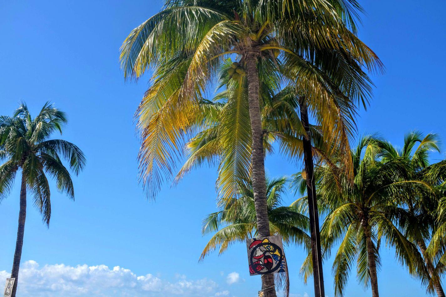 Hibiscus & Nomada : - - Palm Trees