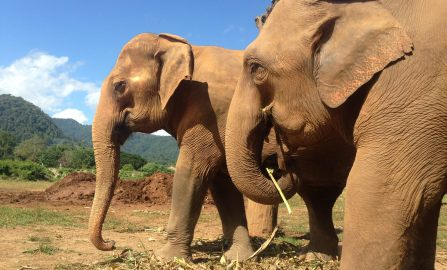 An unforgettable meeting with elephants in Thailand