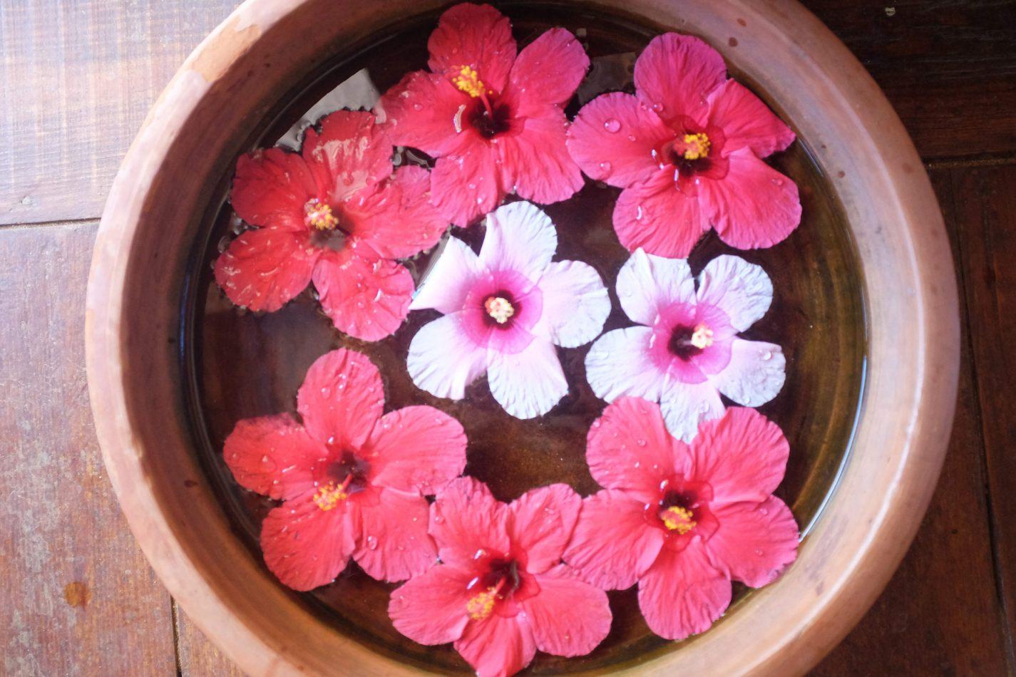 Hibiscus & Nomada : - - Hibiscus Flowers
