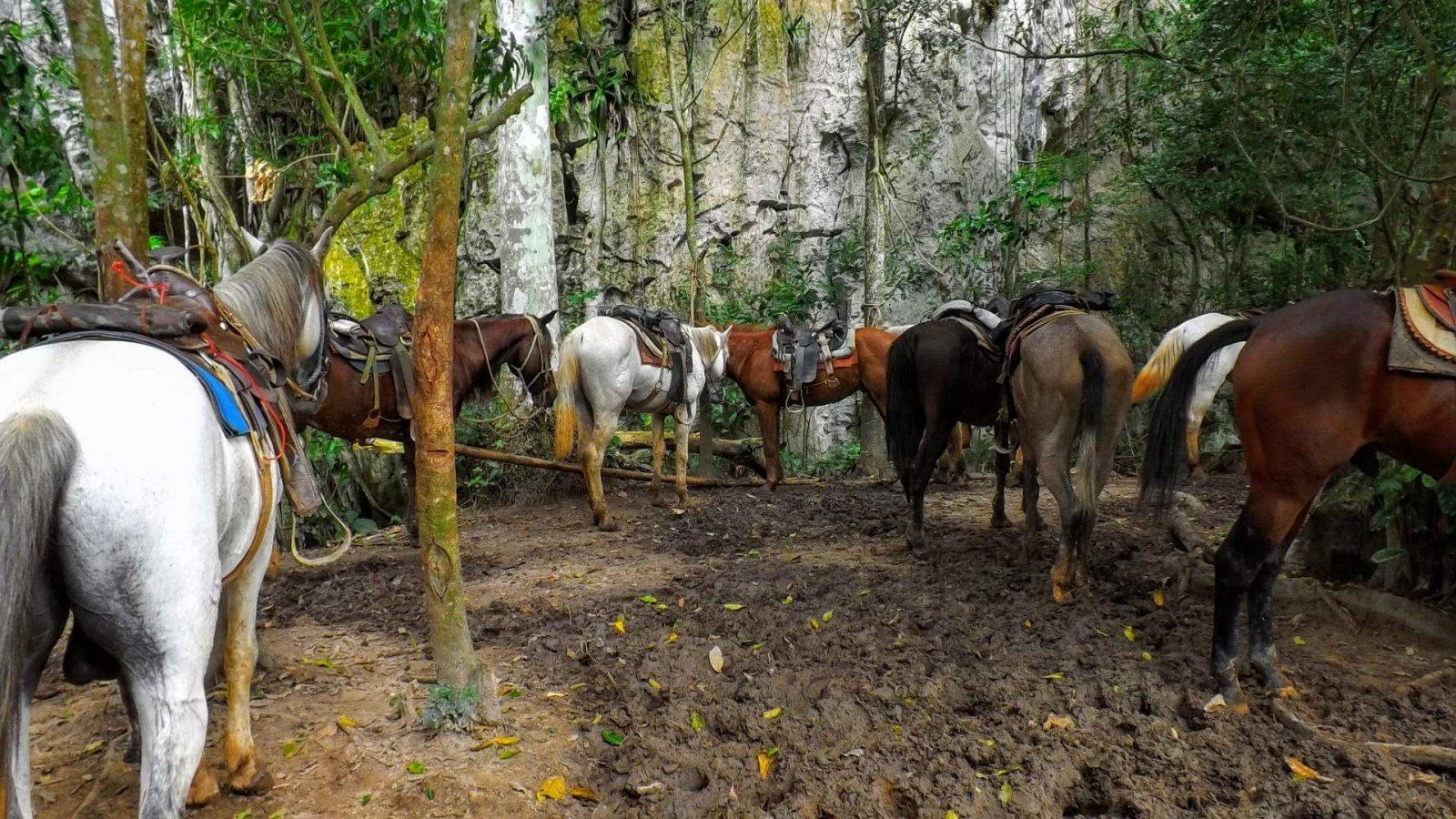 Hibiscus & Nomada : - - Viñales, Cuba, Backpacking, Backpackers, Caribbean