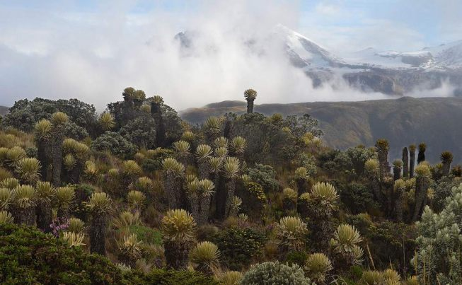 Colombia Climbing Volcanos in Caldas